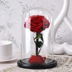 rose éternelle rouge sous cloche classique