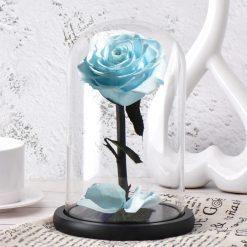 rose éternelle bleue turquoise sous cloche classique