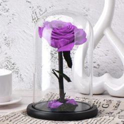 rose éternelle sous cloche violette classique