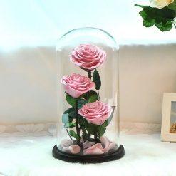 triple rose éternelle rose sous cloche