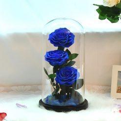 triple rose éternelle sous cloche bleue