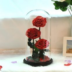 triple rose éternelle sous cloche rouge