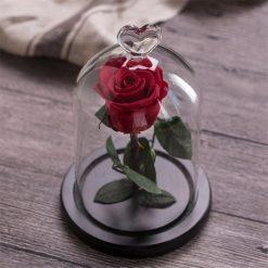 rose éternelle sous cloche rouge my love