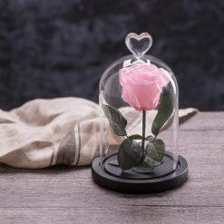 rose éternelle sous cloche rose my love