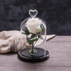 rose éternelle sous cloche blanche My love