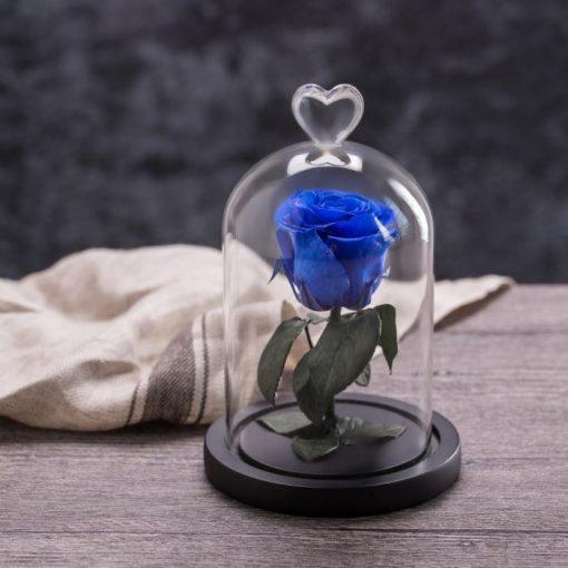 rose éternelle sous cloche bleue my love