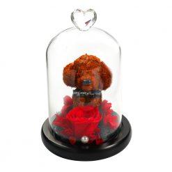 composition rose éternelle rouge sous cloche avec ptit chien
